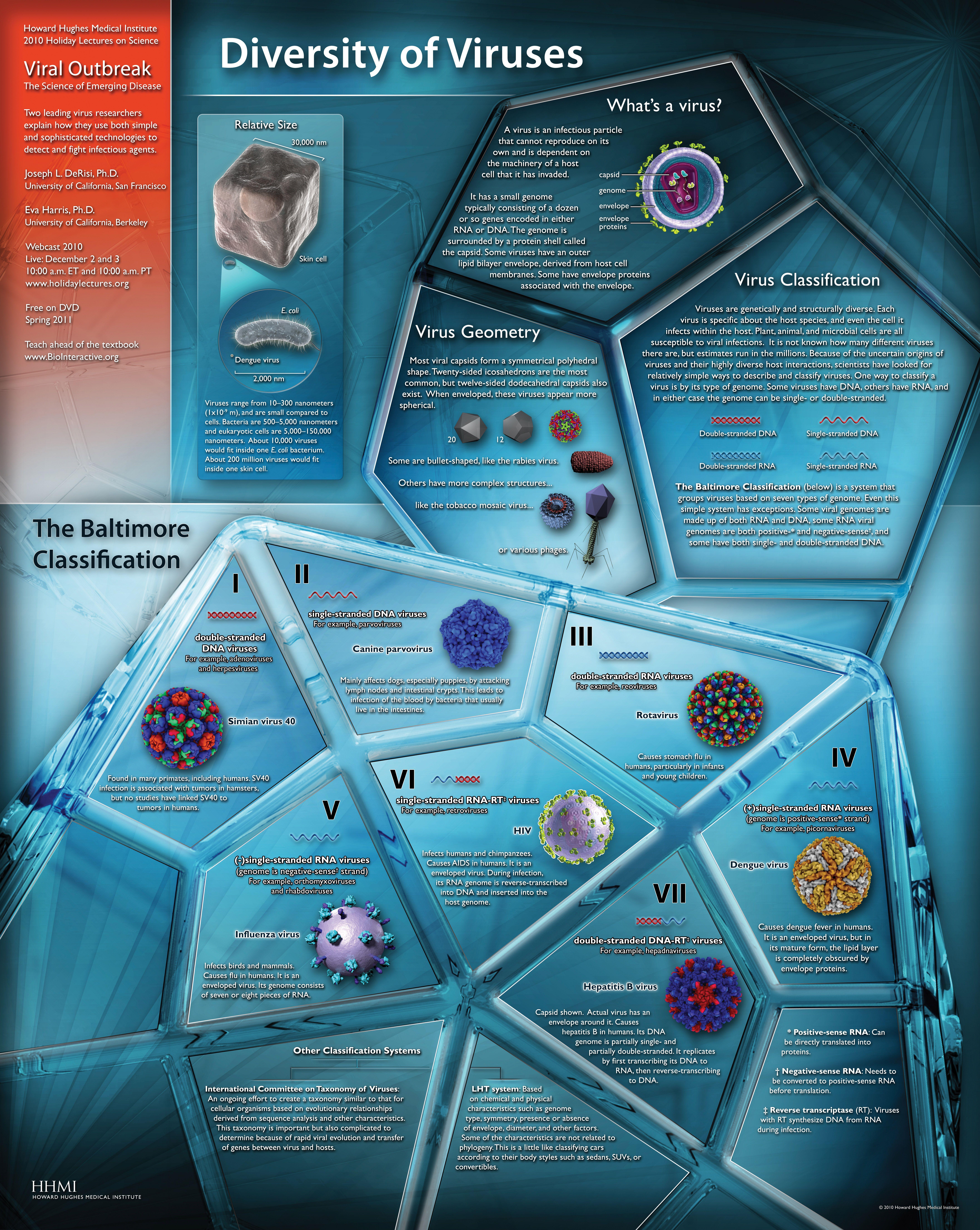 Diversity Of Viruses Poster Graphic - Illustrating