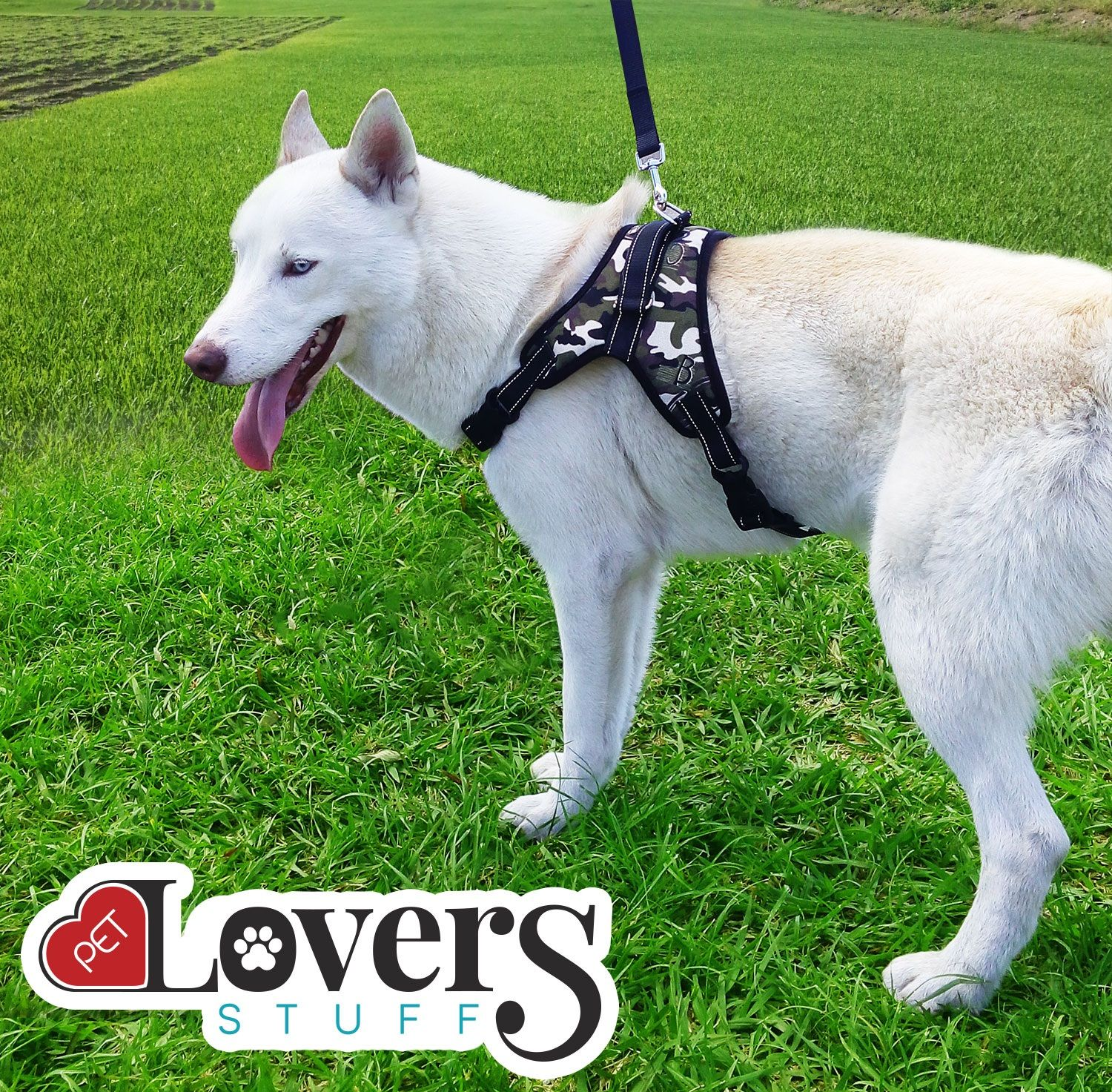 Prevent Injury Unlike Traditional Pet Collars This Dog Harness