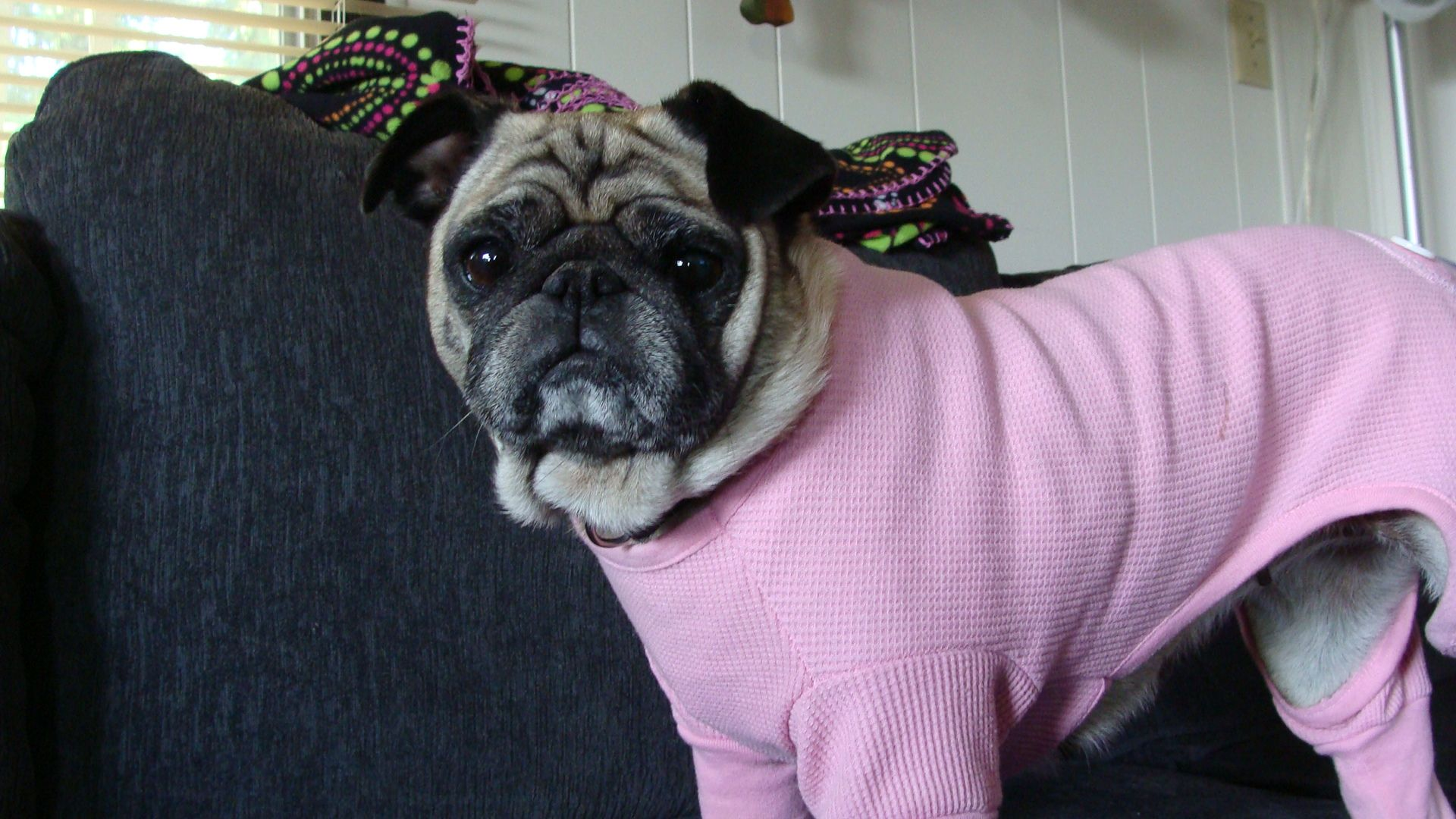 Daisy may in her long john pjs puggy love pinterest long johns daisy may in her long john pjs altavistaventures Images