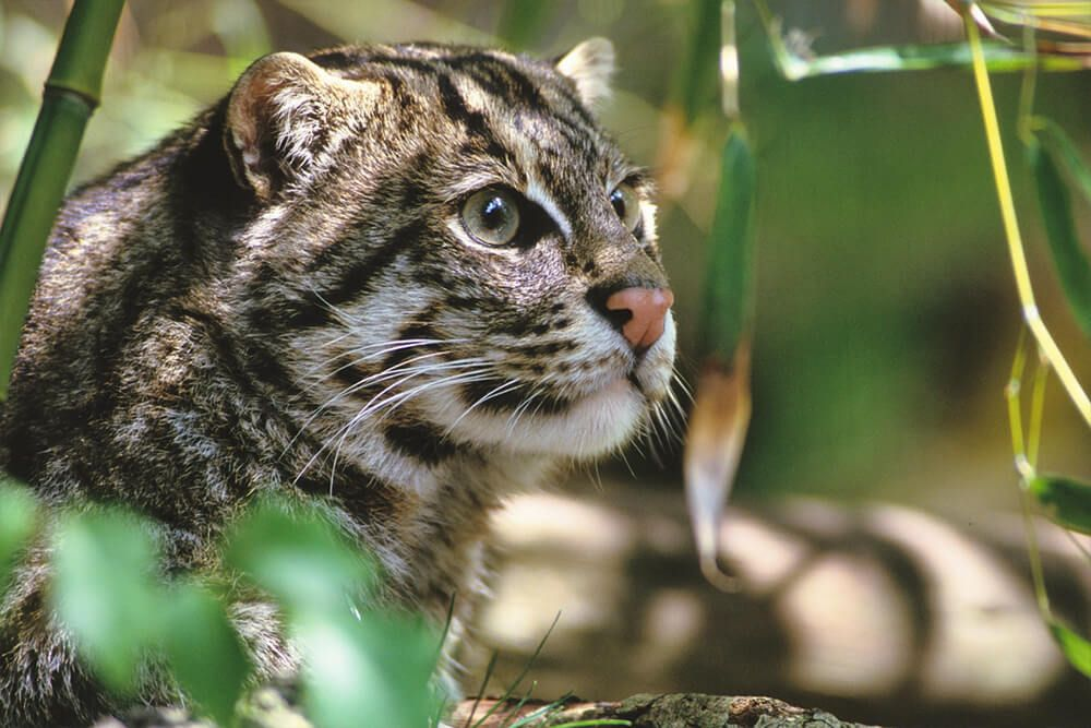 If you think fishing cats look cute and cuddly think