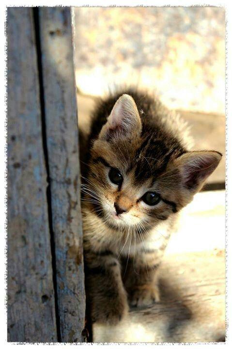 Pin Von Ioana Auf Cats Cats Cats Katzen Bilder Kleine Katzen Susse Katzen