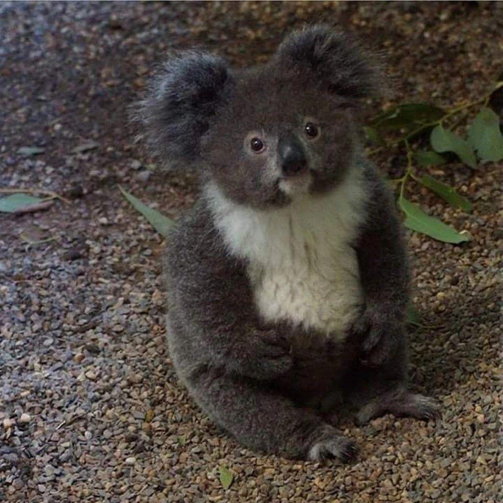 Pin By Barbara Hallinan On Miezen Hunde Und Wildtiere Cute Baby Animals Cute Animals Baby Animals