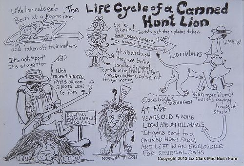 The Life Cycle of a Canned Hunt Lion | Art by Liz Clark
