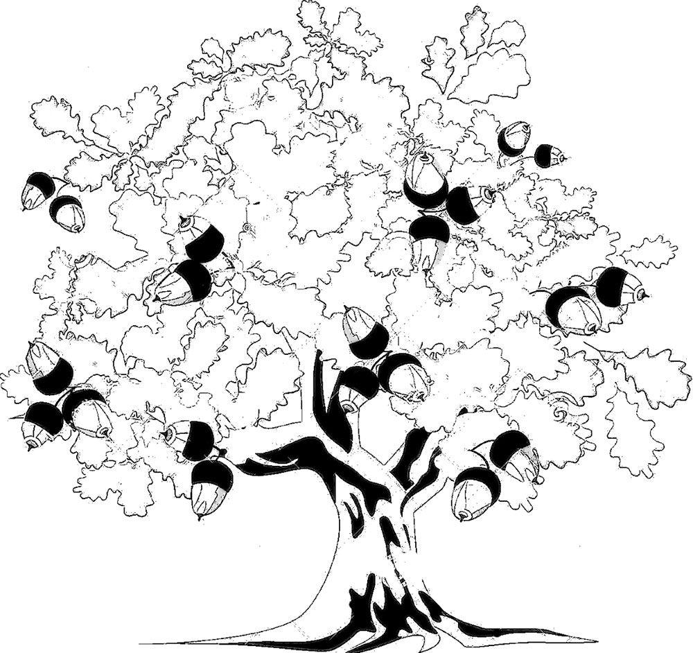 81358e760ada Раскраска дуб с желудями, листья дуба. Распечатать картинки для детей.