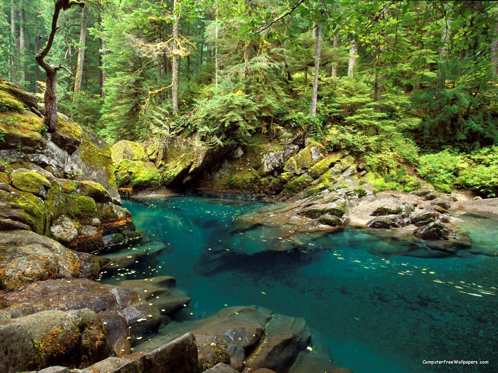 Ohanapecosh River, Mt Rainier National Park, Washington - there is a link  here to 33 pictures of beautiful rivers of the world.