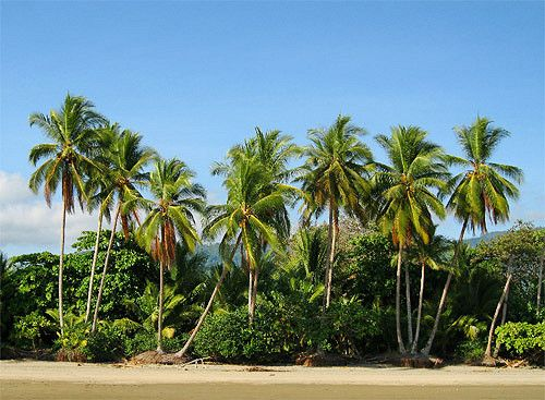 #costarica #puravida #travel #centralamerica #traveltocostarica #hotelincr #traveltocr