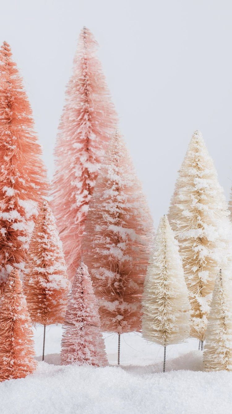 Christmas Tree Magnolia // Background Ideas  #winterbackground