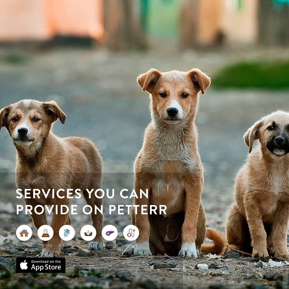 Petterr Is The Only Network That Offers Pet Owners With Pet Trainers With Good Reviews In Dubai Our Portal Has Var Dog School Cute Puppies Child Friendly Dogs