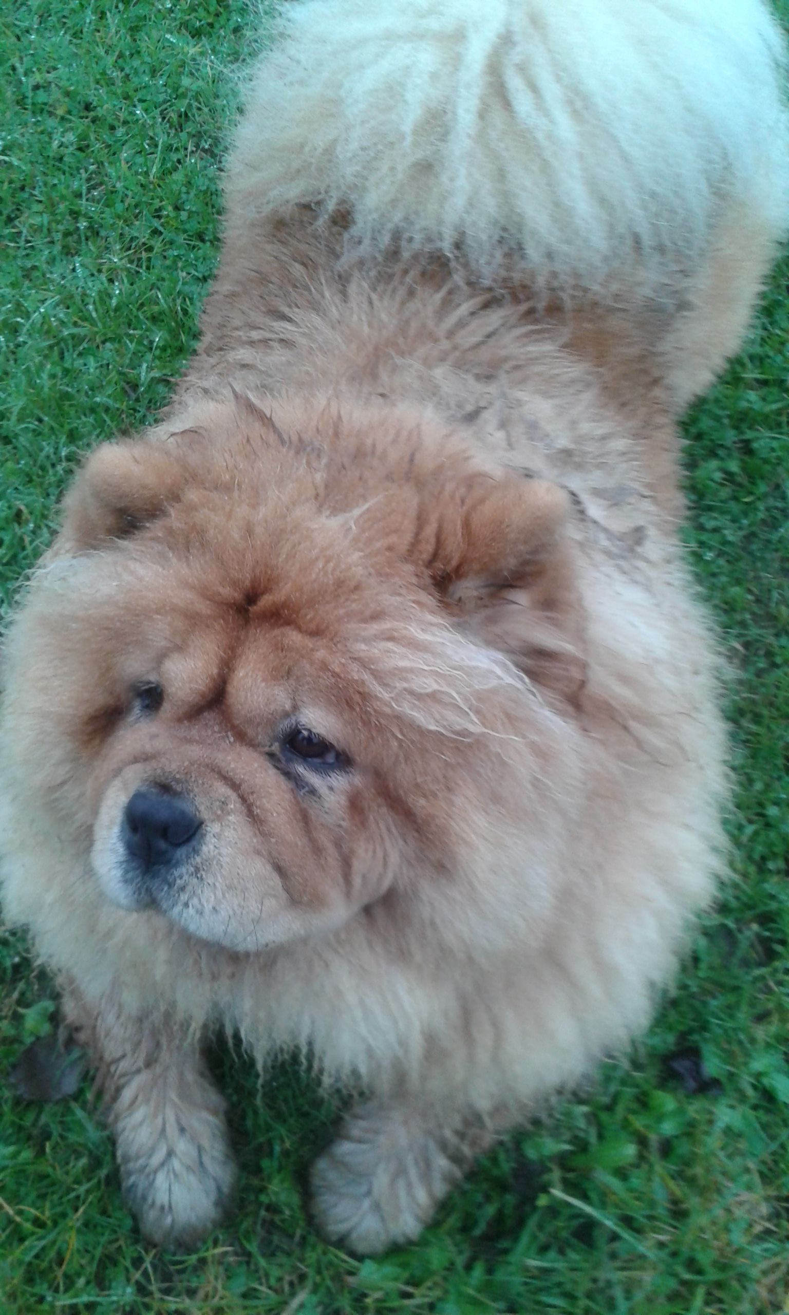 Mishka After Rolling In Wet Grass Beautiful Dogs Best Dogs For