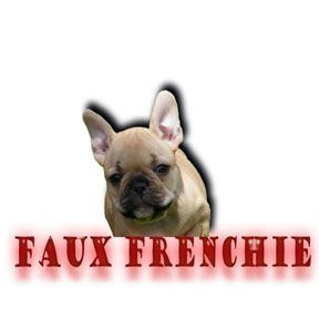 Tiny Teacup Toy Frenchbulldog French Bulldogs Frenchbos