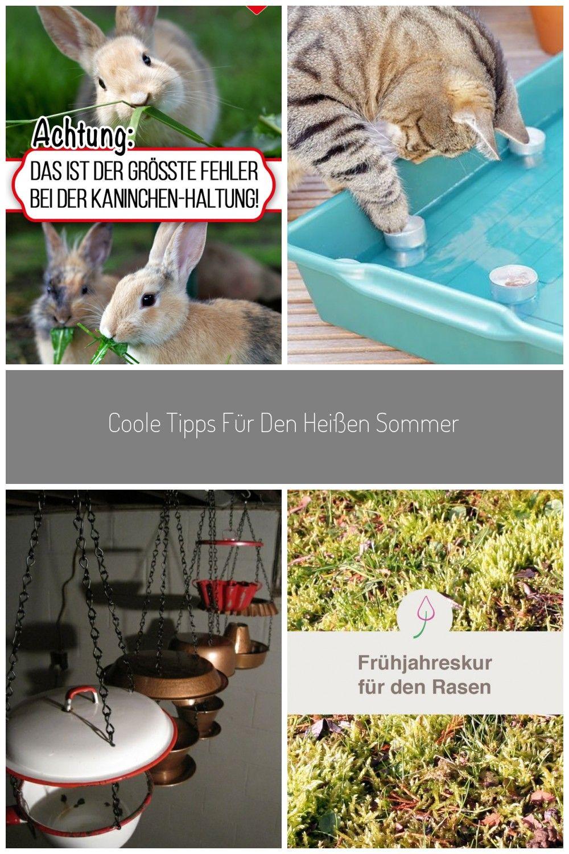 15+ Pin auf kaninchen ideen Fotos