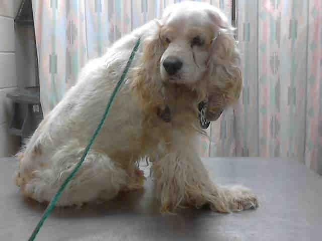 Carmine Petharbor Com Animal Shelter Adopt A Pet Dogs Cats Puppies Kittens Humane Society Spca Lost Found Animal Shelter Humane Society Dogs
