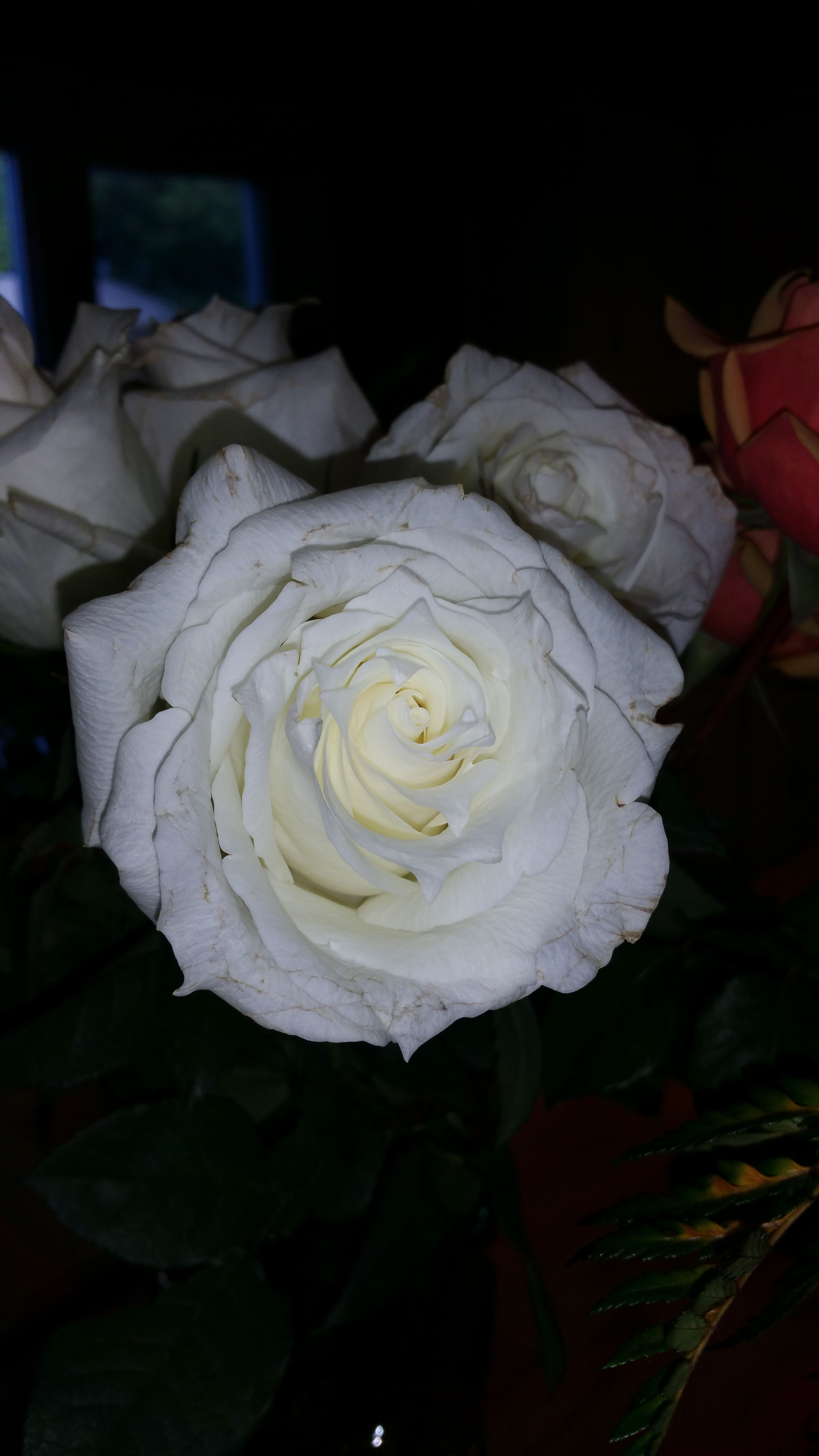 Time to stop & clear off the negative energy. The white light, positive energy with protection like thorns on a rose