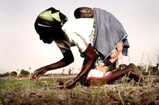 cosecha de amor
