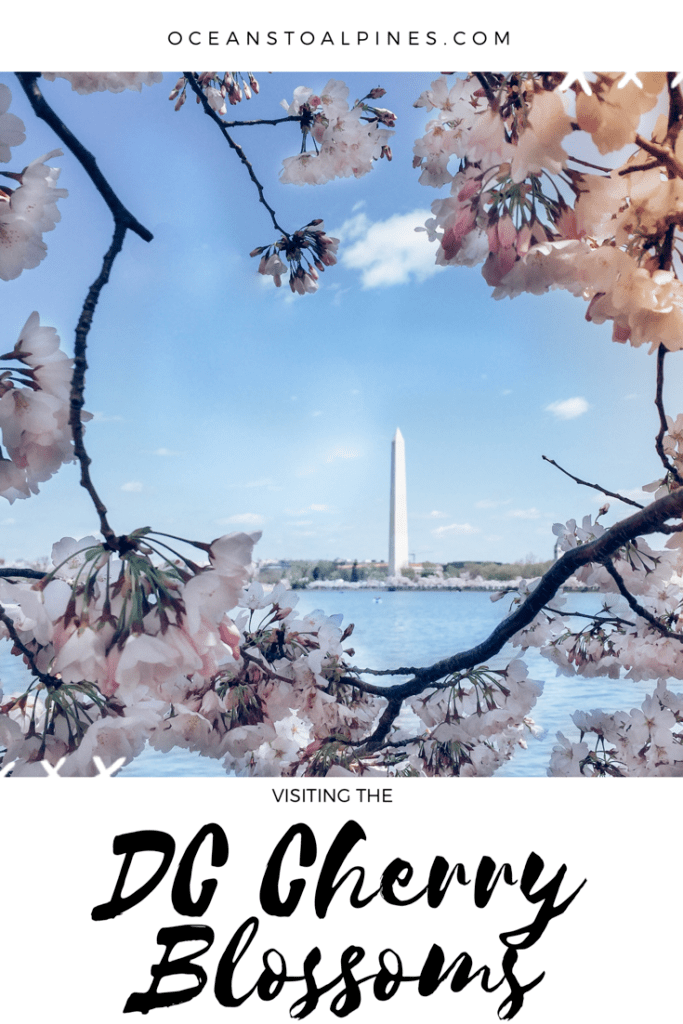Tips For Visiting The Cherry Blossoms At Washington Dc Additionally Some Must See Sites Whil North America Travel Destinations Travel Usa Washington Dc Travel