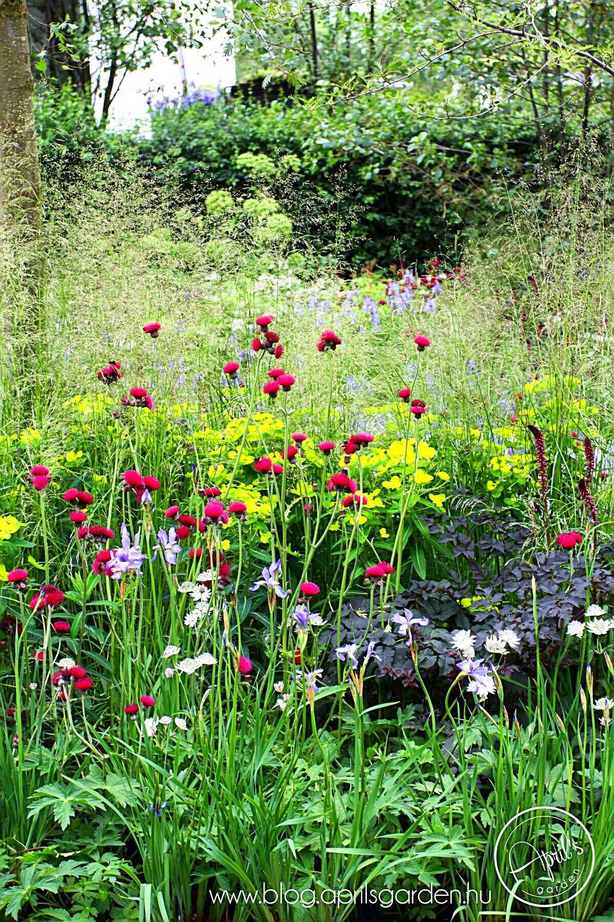Pin by jo husby on cottage garden wispy | Garden landscape ...