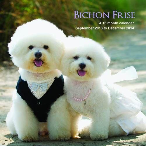 Bichon Frises 2014 Wall Calendar | | DogBreedStore.com