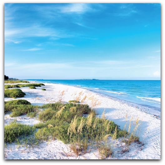 Experience The Great Outdoors In Florida Most Beautiful Beaches Florida West Coast Beaches Beautiful Beaches
