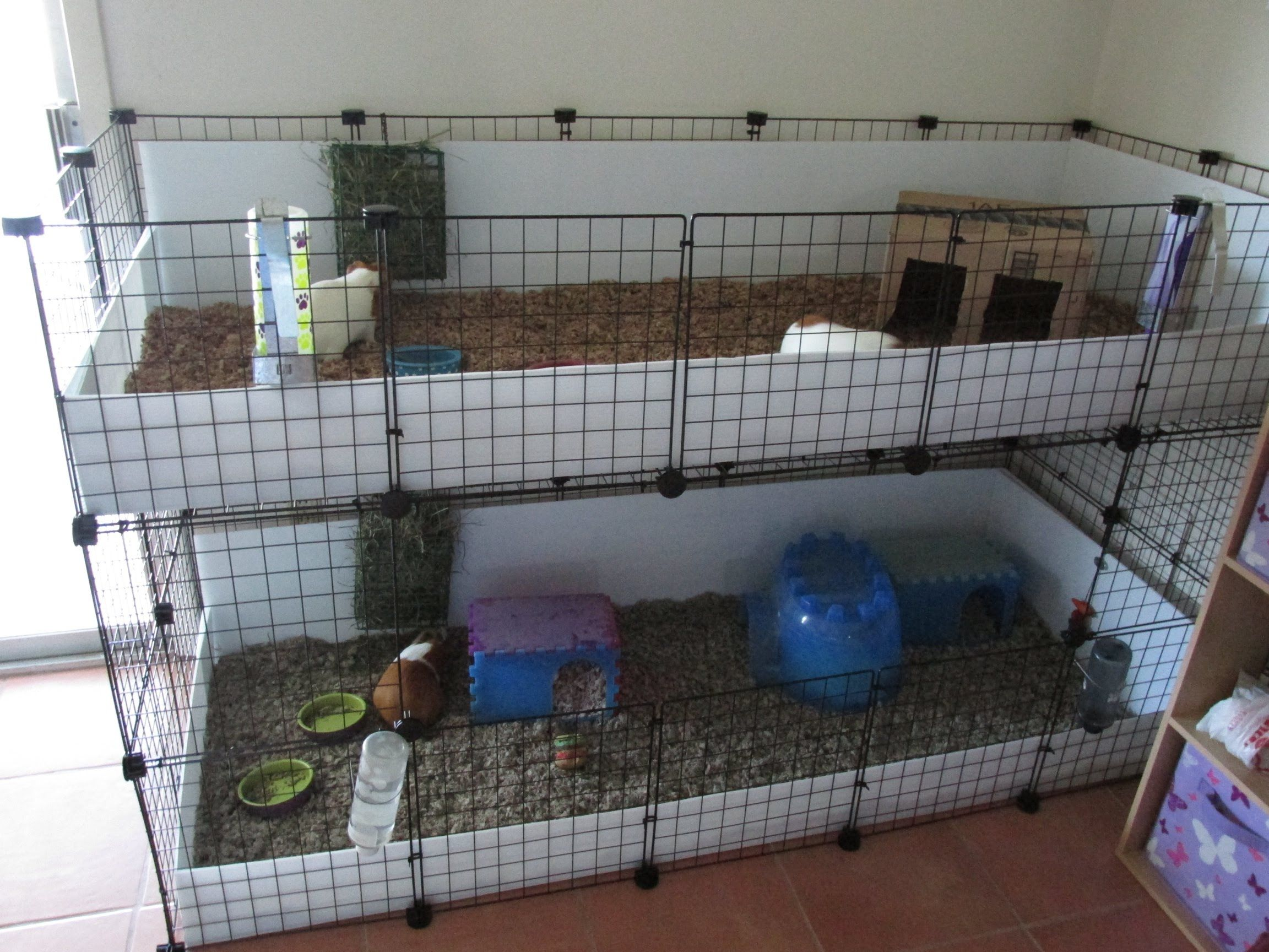 Pin On Future Pets Accommodations