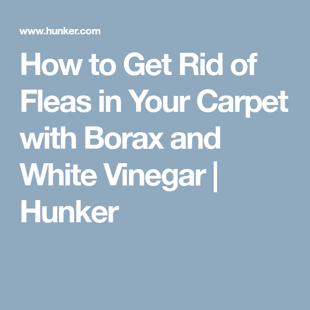 How To Get Rid Of Fleas In Your Carpet With Borax And