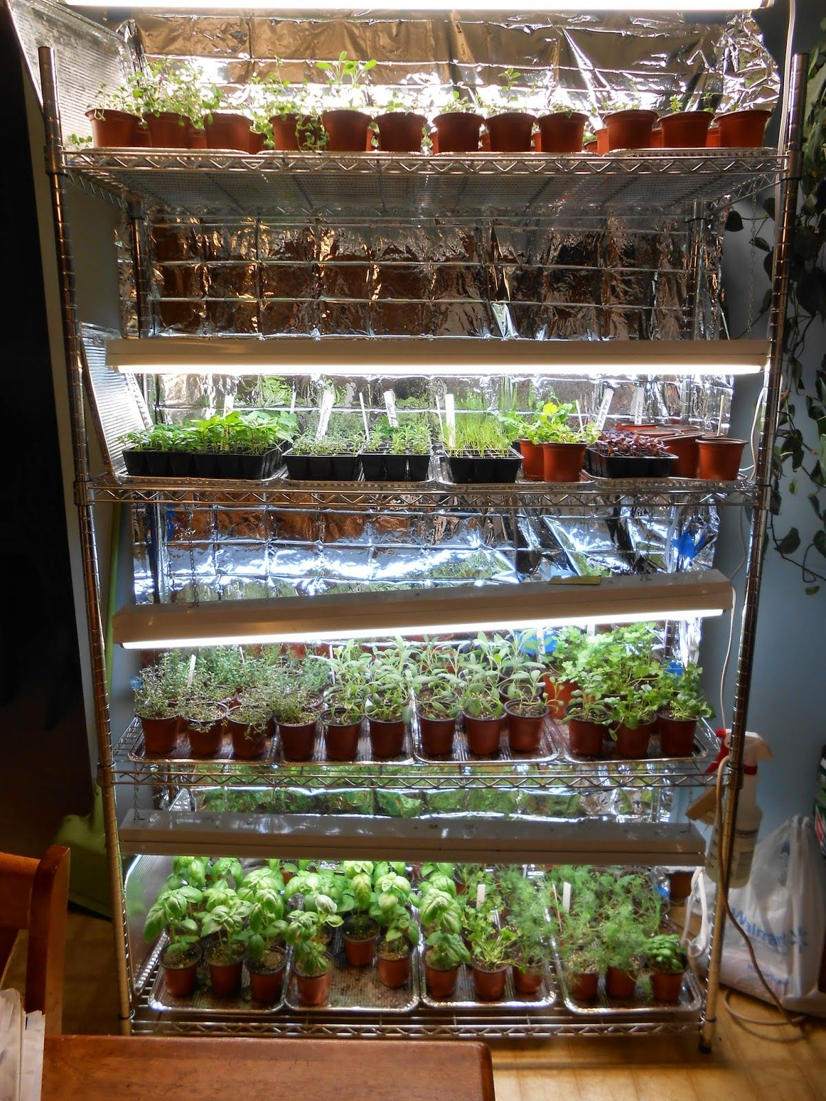 A Blogger S Tips For Successful Indoor Seed Starting Foil Cookie Sheets Used As Trays Plus E Blanket Nice And Reflective