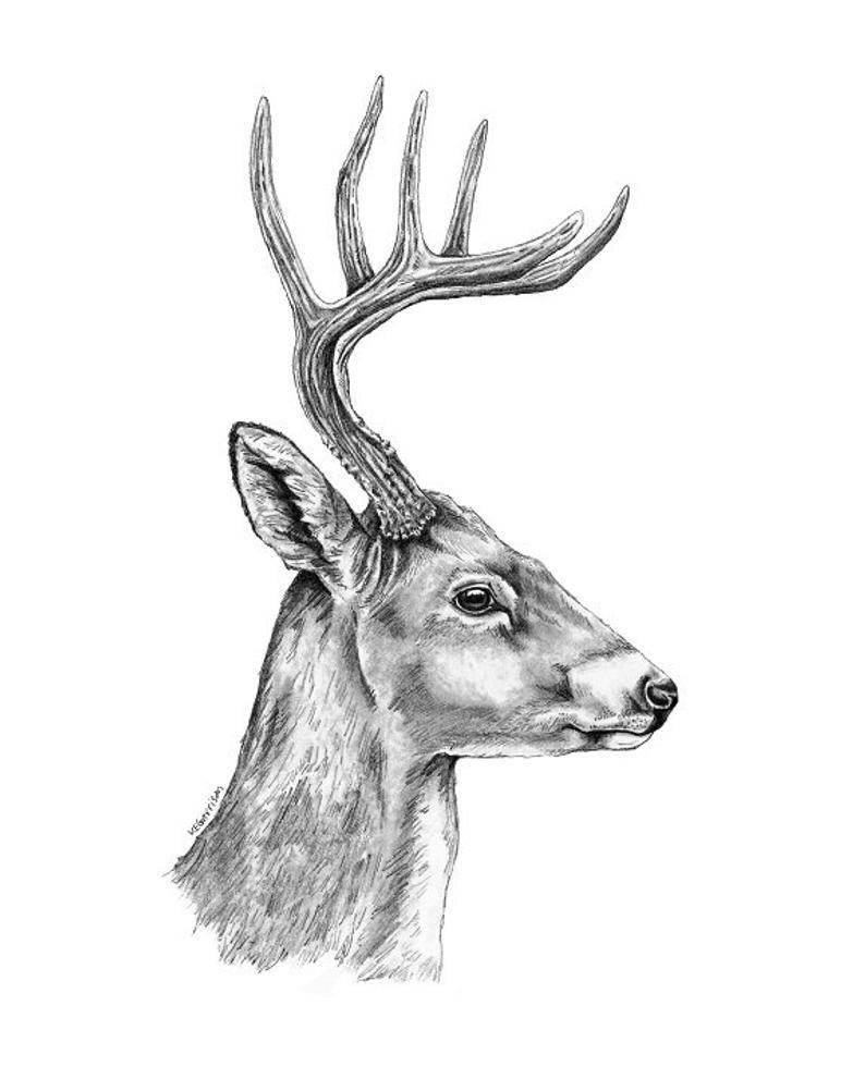 Deer Art Woodland Deer Art Deer Print Deer Art Print Deer Etsy In 2020 Deer Art Print Deer Art Deer Artwork