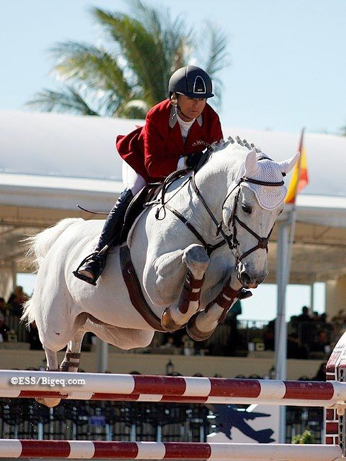Jumping horse - Swagger and Deborah Stephens  WEF 2013  Photo Credit: Big Eq