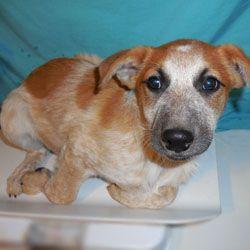 Lifeline Puppy Rescue Brighton Colorado Cuteness Beyond Compare