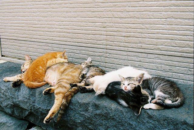 Kissan päivät.