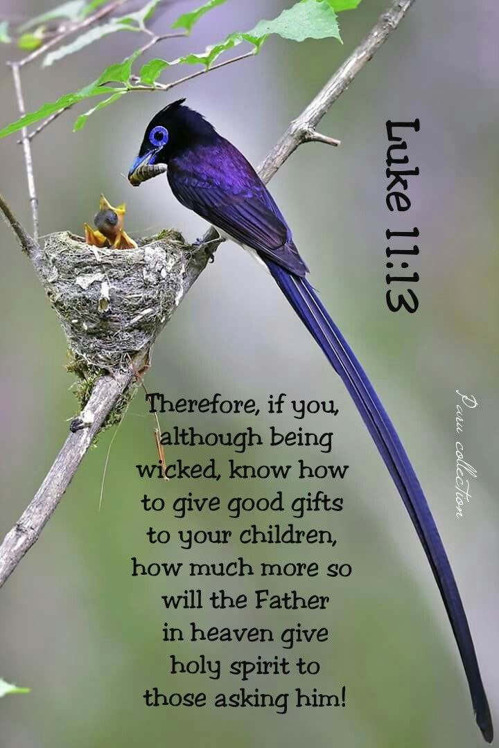Matthew 626 bird pinterest bible verses and scriptures which of you fathers if your son asks for a fish will negle Images