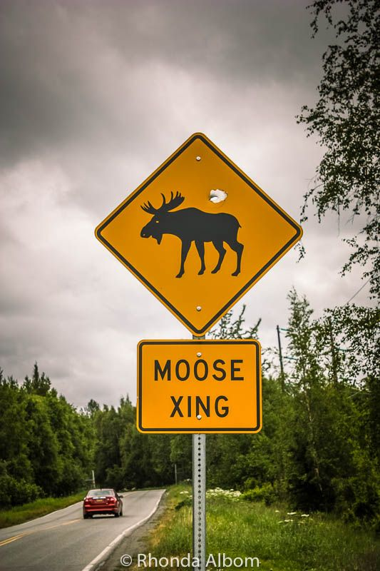 We spotted this Moose crossing sign seen while driving from Anchorage to Whittier in Alaska. Its a fascinating place to trave in USA, although often not thought of when people think about the next USA destination to visit.  #travel #Alaska #roadsign #moose #moosecrossing #USA #traveltheUSA #travelInUSA #travelAlaska