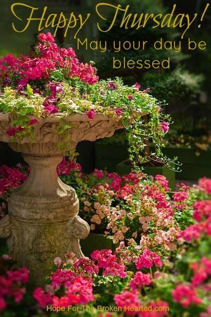 Free Image on Pixabay - Nature, Garden, Flower, Plant ...