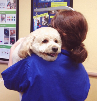 Wet Winter Weather May Call For A Day At The Spa Petsmartgrooming Ig Pic B Kaufman Cat Grooming Dog Grooming Pet Grooming
