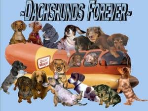 Dachshunds Forever Dachshunds Trail To World Domination Live