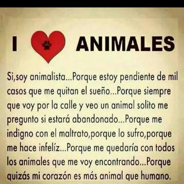 Yo Amo I Love Dogs Pet Hacks Animals Beautiful