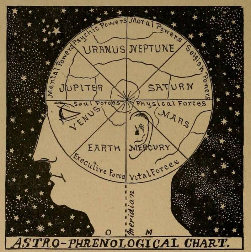 Image result for phrenology chart art