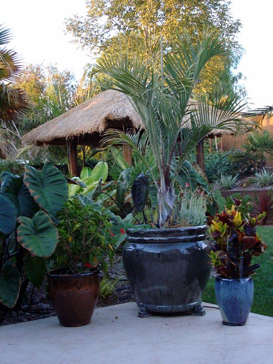 Good Love The Idea Of A Tropical Look For The Backyard.