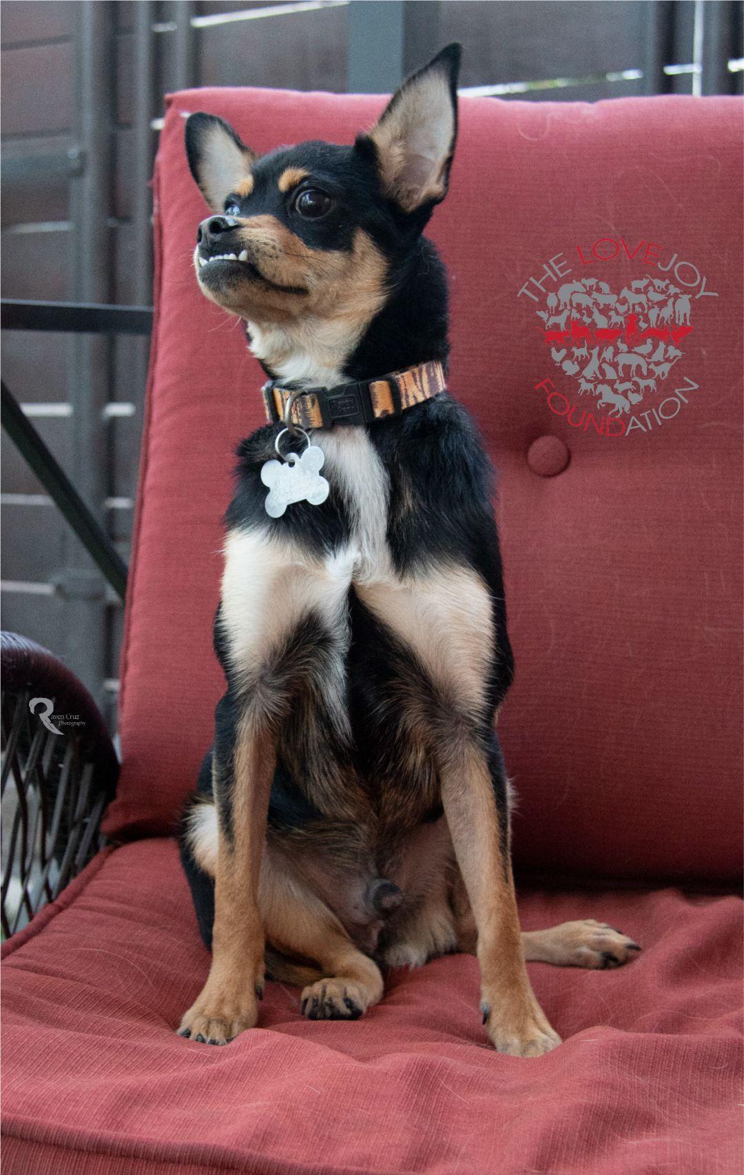 Adopt Homer on Dog adoption, Animal shelter, Puppy adoption