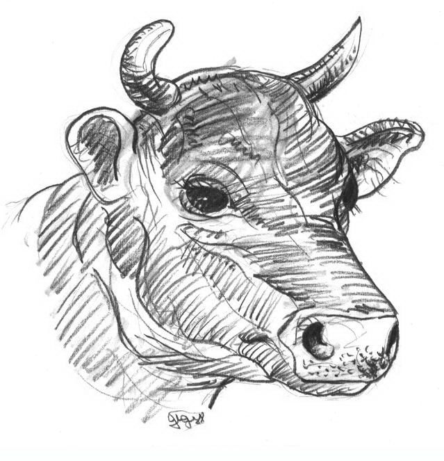 cow 7 adult coloring pages