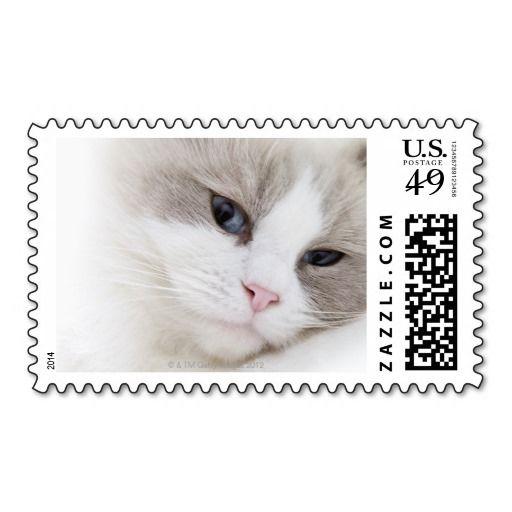 Ragdoll Cat Postage Zazzle Com Com Imagens Selo Dos Correios Selos