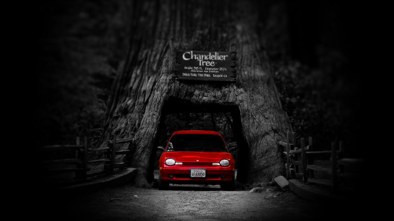 Wallpaper Car Under The Chandelier Tree [1280x720]