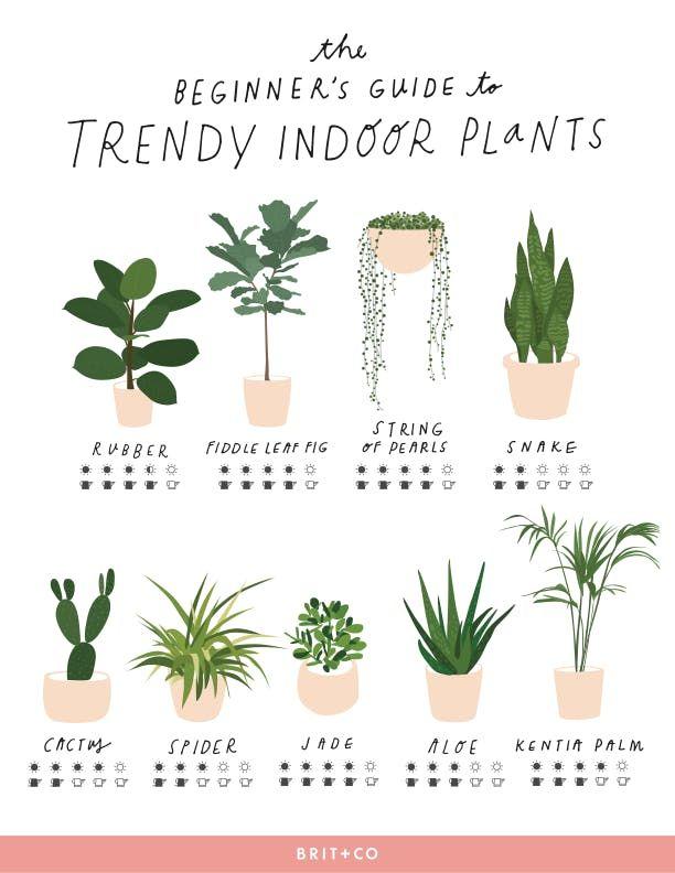 Trendy-Indoor-Plant-Care-Printable.pdf 612×792 pixels #houseplant