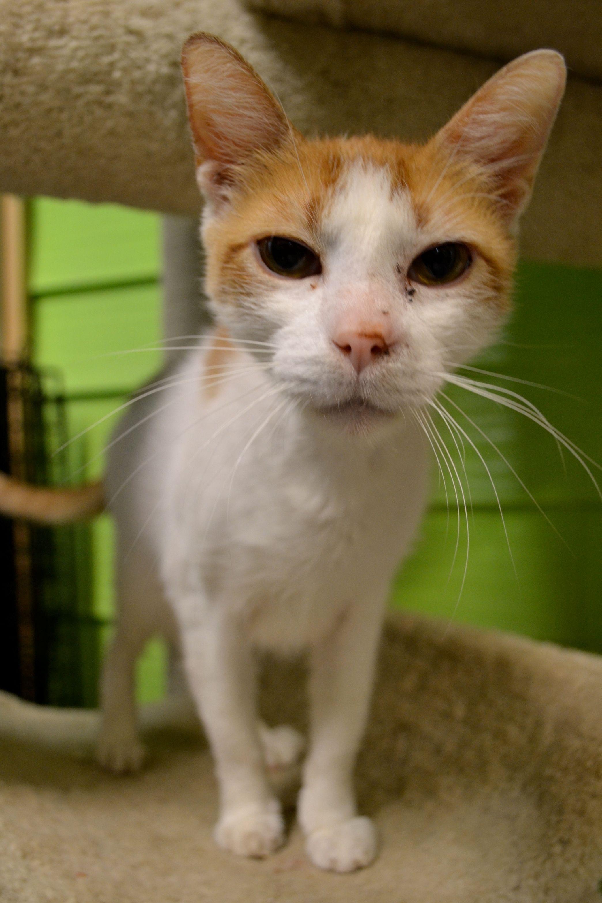 Austin Pets Alive! Helping People Help Pets Pets
