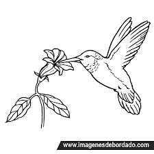 Resultado De Imagen Para Dibujos Para Bordar A Mano Bird Coloring Pages Hummingbird Drawing Flower Coloring Pages