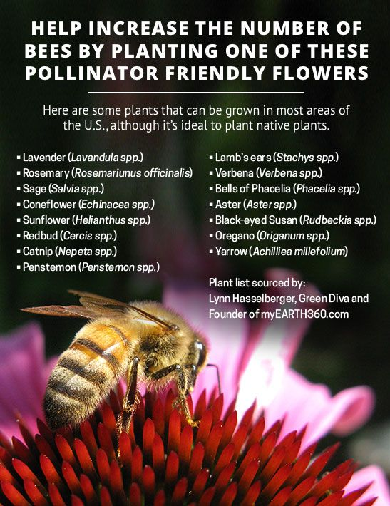 Free Seeds To Help Feed A Bee And Erflies Honey Bees Pollinate Many Of The Foods We Love But Often Can T Find Enough Food For