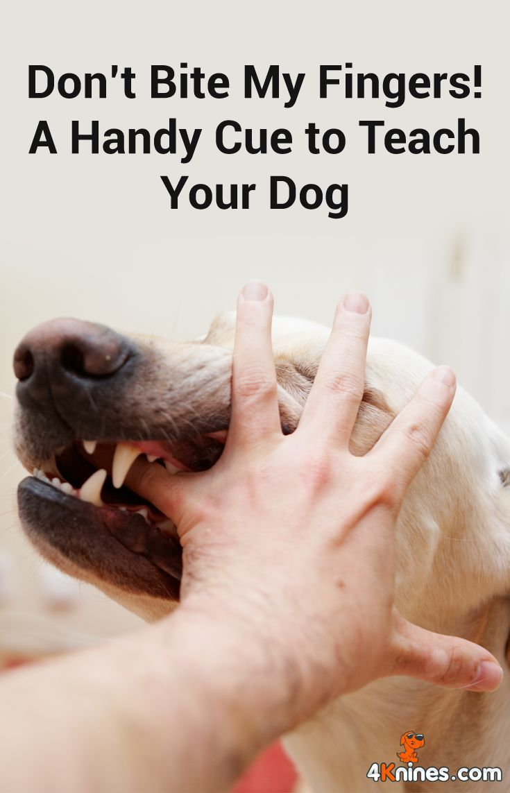 Don T Bite My Fingers A Handy Cue To Teach Your Dog Puppy