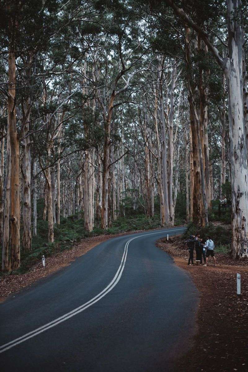 Boranup Forest – By the Sea                              …