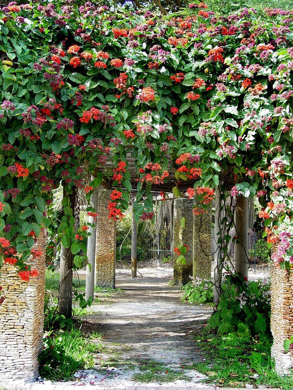 Fairchild Garden On Twitter Fairchild Tropical Botanic Garden Botanical Gardens Tropical Garden