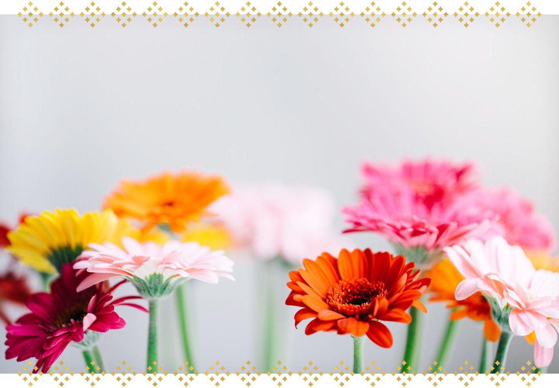 The Complete Gerbera Daisy Care Guide Ftd Com Gerbera Daisy Care Gerbera Daisy Gerbera