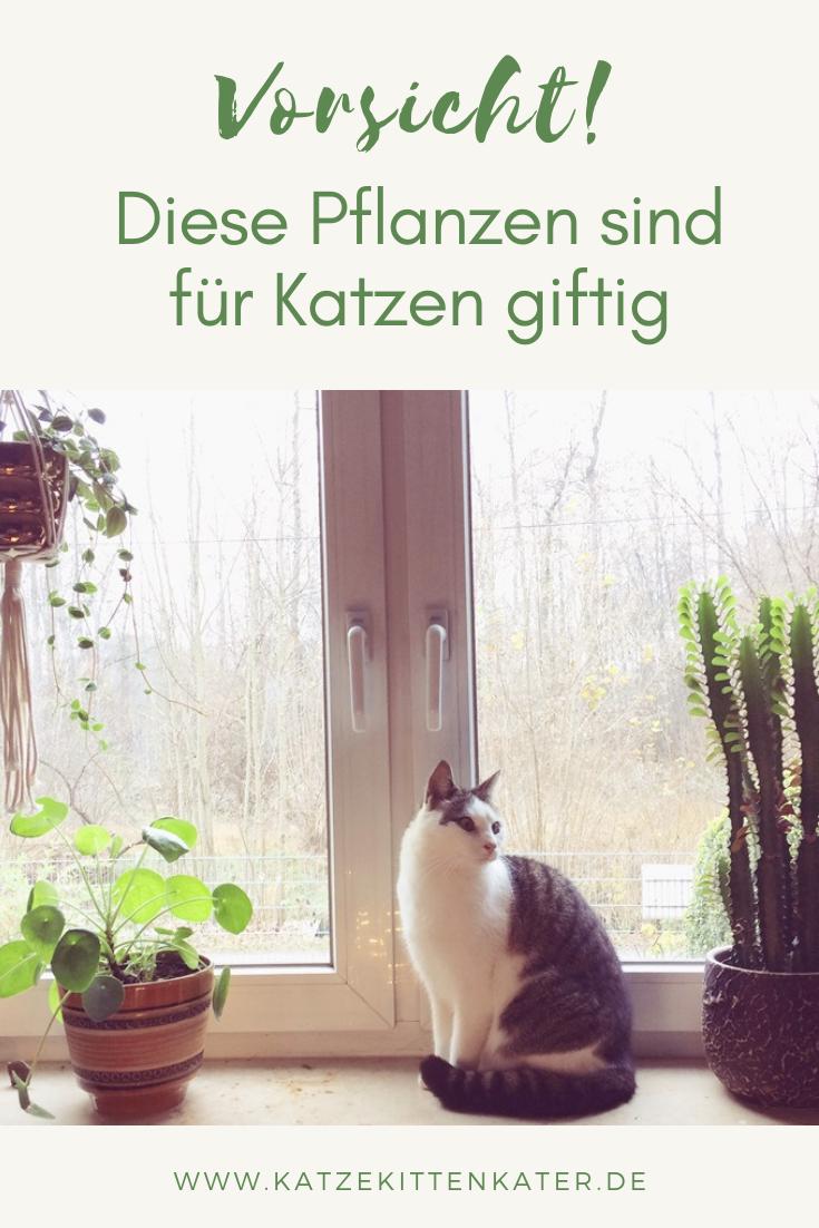 Vorsicht Diese Pflanzen Sind Fur Katzen Giftig Mit Bildern Katzen Giftige Pflanzen Katzen Kitten